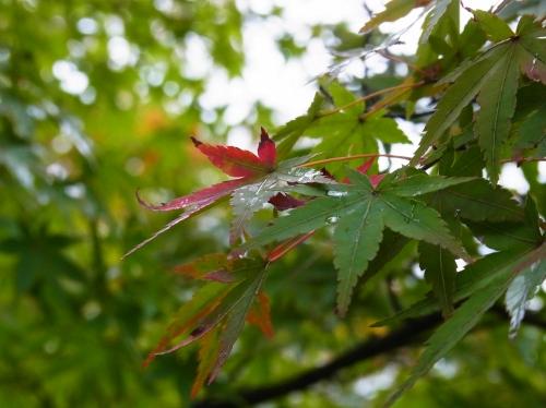 Autumn2010-02.jpg