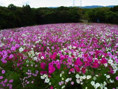 万博公園-36.jpg