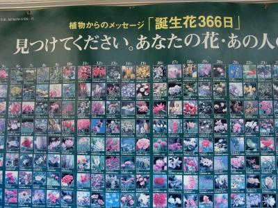 金木犀2010-05.jpg