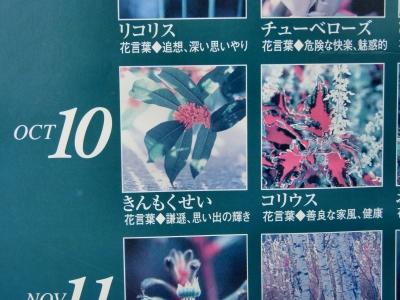 金木犀2010-06.jpg