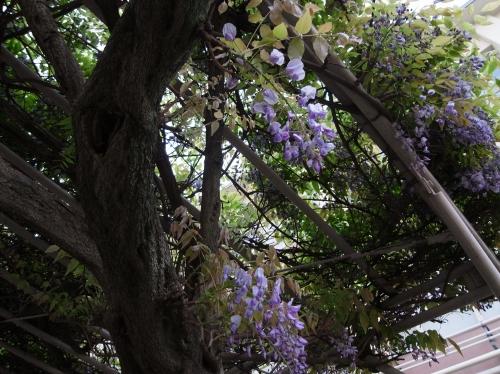 Flower 2010_04_26-02.jpg