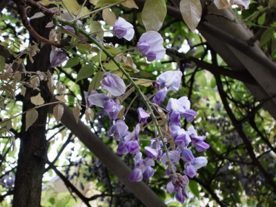 Flower 2010_04_26-03.jpg