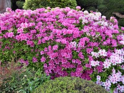 Flower 2010_04_26-04.jpg