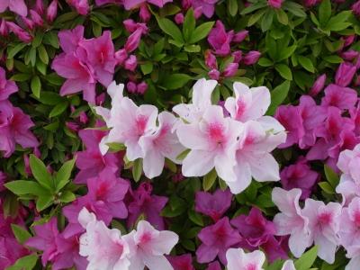 Flower 2010_04_26-05.jpg