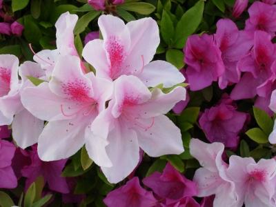 Flower 2010_04_26-06.jpg