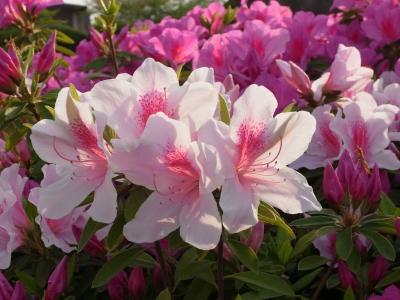 Flower 2010_04_26-07.jpg