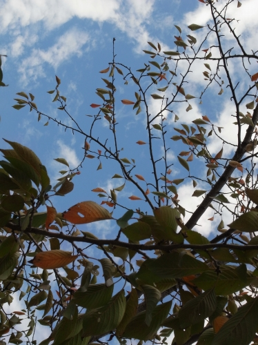 Flower 2010_10_29-01.jpg