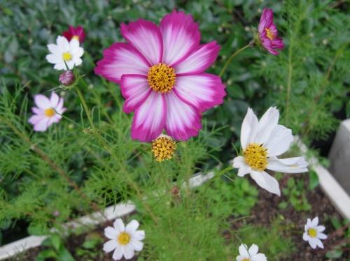 Flower 2010_10_29-05.jpg