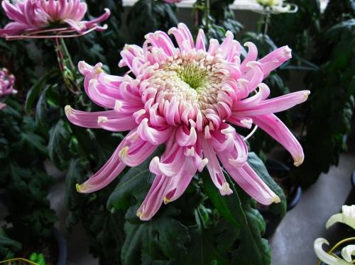 Flower 2010_10_29-06.jpg