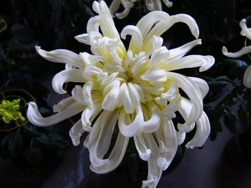 Flower 2010_10_29-07.jpg