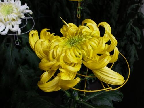 Flower 2010_10_29-08.jpg