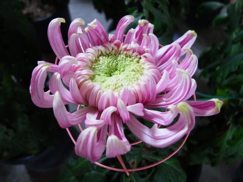 Flower 2010_10_29-09.jpg