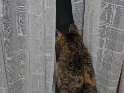 Nyanko 2010_05_28-03.jpg