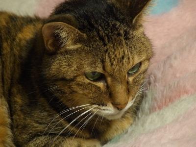 Nyanko 2010_10_23-03.jpg