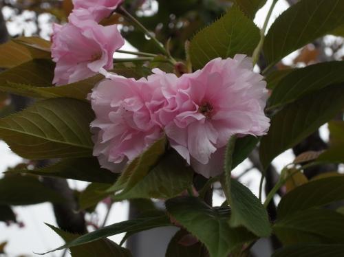 flower 2010_04_13-03.jpg