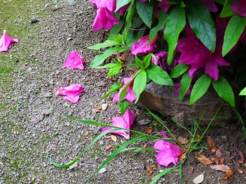 flower 2010_05_12-02.jpg