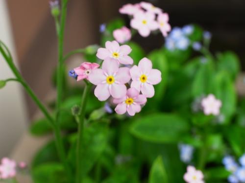 flower 2010_05_12-03.jpg