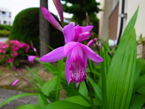 flower 2010_05_12-06.jpg
