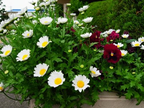flower 2010_05_12-07.jpg