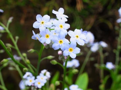 flower 2010_05_12-08.jpg