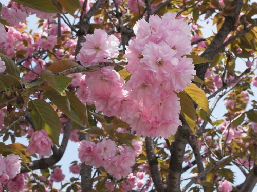 flowers 2010_04-01.JPG