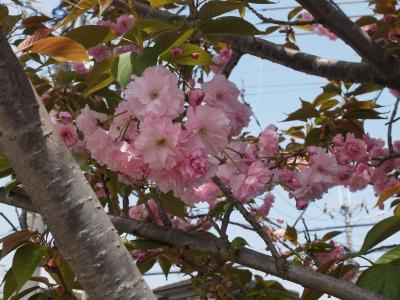flowers 2010_04-02.JPG