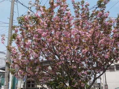 flowers 2010_04-03.JPG
