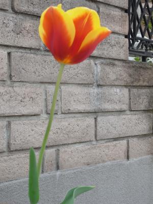 flowers 2010_04-04.JPG