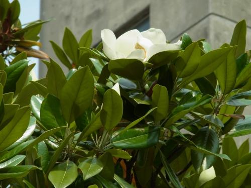 flowers 2010_06_17-02.jpg