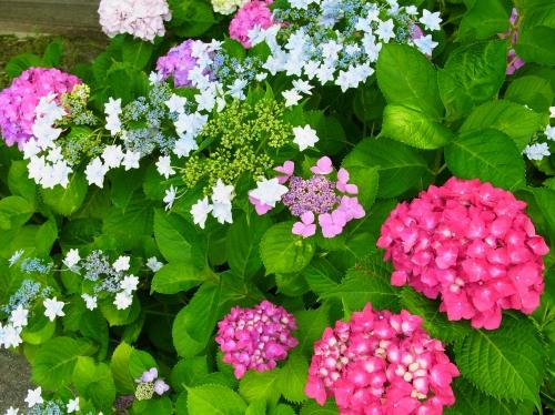 flowers 2010_06_17-04.jpg