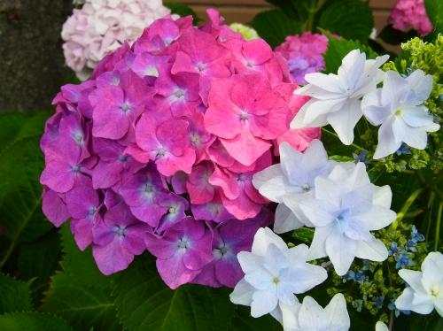 flowers 2010_06_17-05.jpg