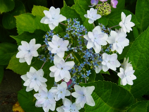 flowers 2010_06_17-06.jpg