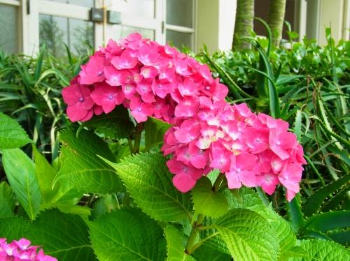 flowers 2010_06_17-07.jpg