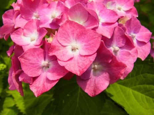 flowers 2010_06_17-08.jpg