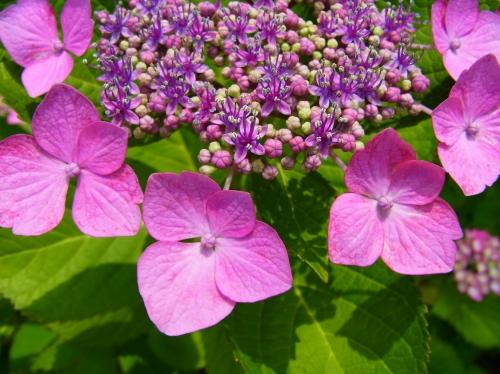 flowers 2010_06_17-09.jpg