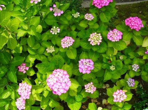 flowers 2010_06_17-10.jpg